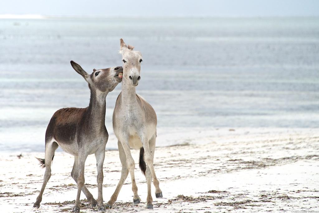 Matemwe Beach Zanzibar
