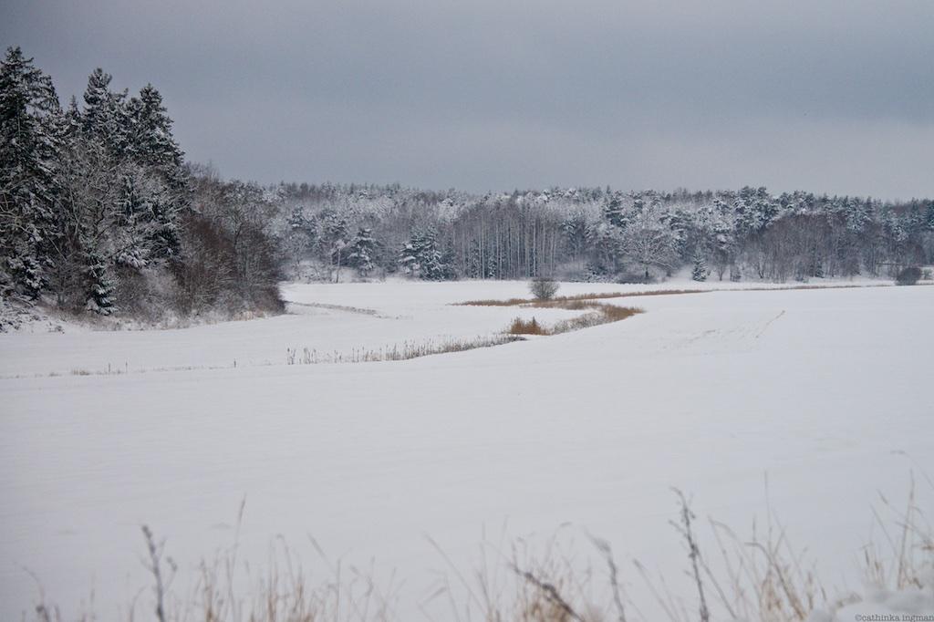 Drottningholm jan 23 86