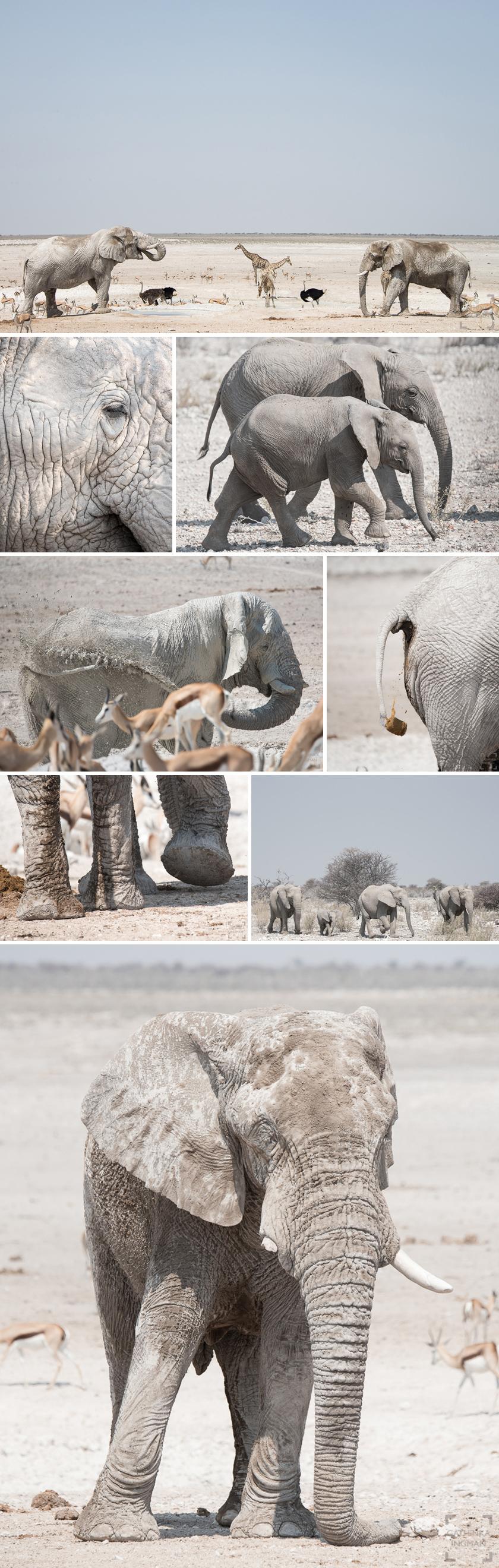 Safari Etosha Ongava elefanter