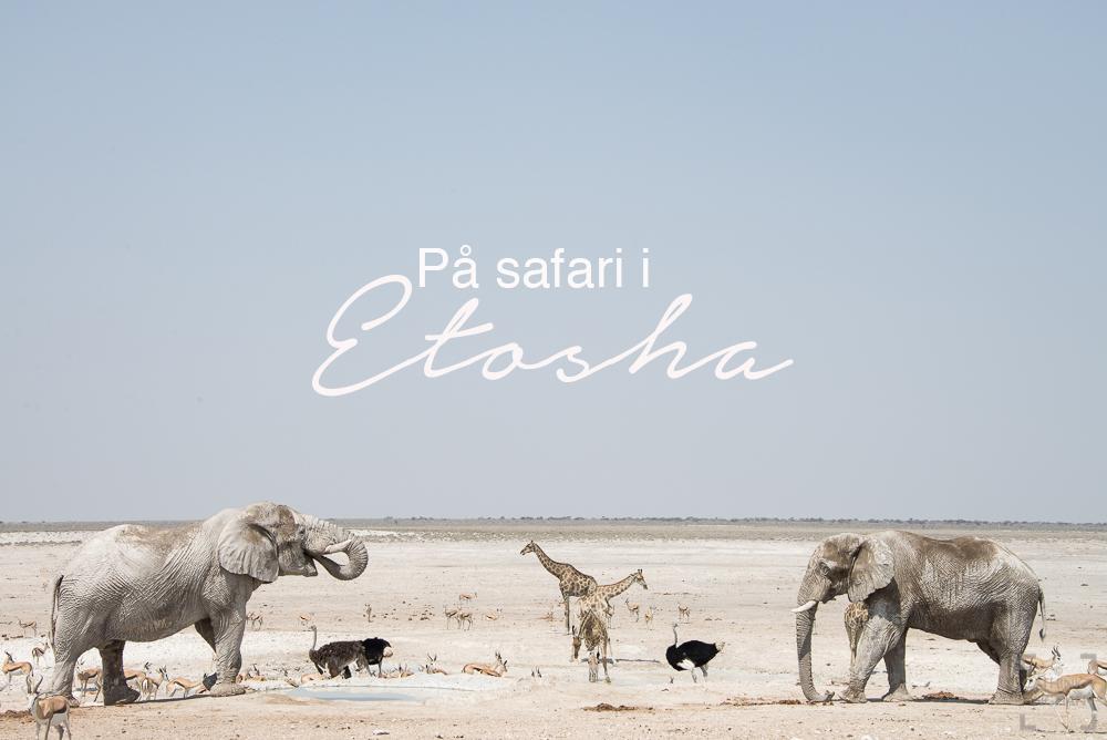 På safari i Etosha, Namibia