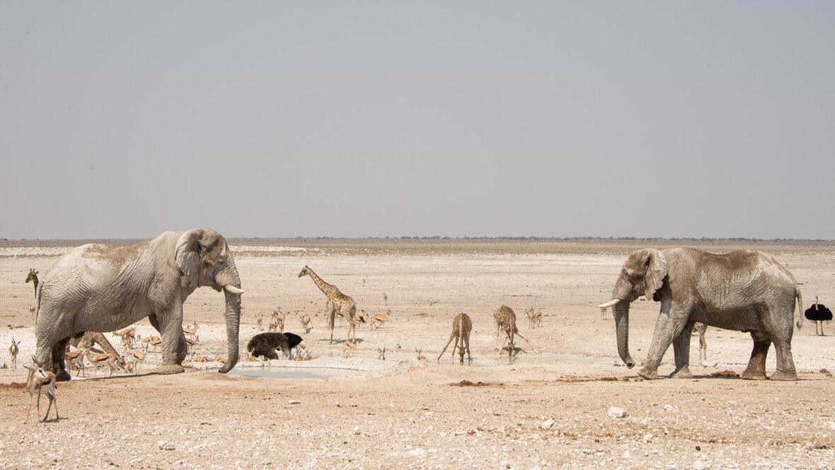 safari i Etosha
