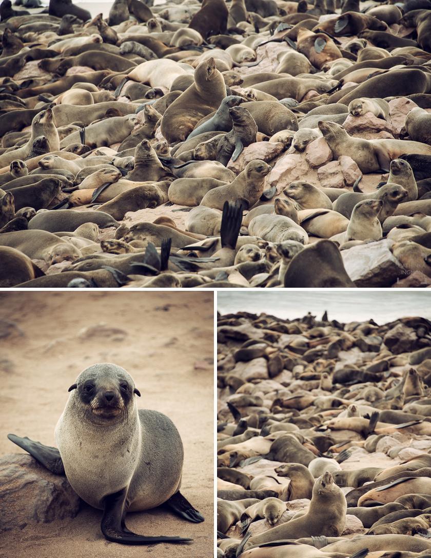 Roadtrip Namibia Skeleton coast