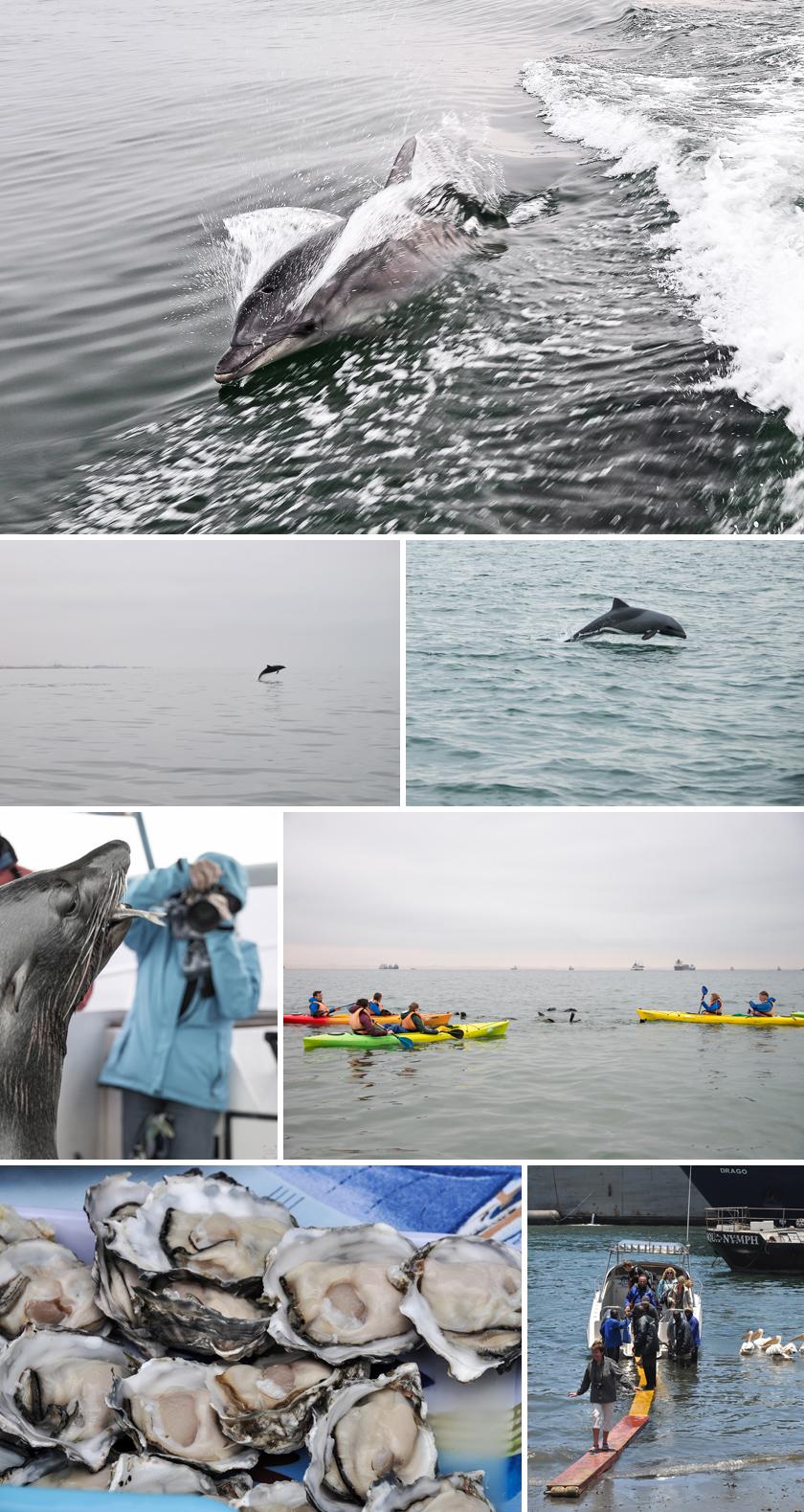 Swakopmund, Delfinsafari, levo tours walvis bay