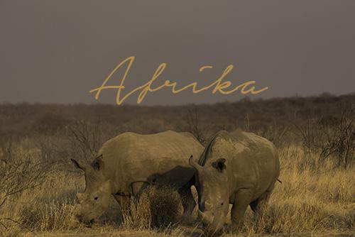 Reseblogg Afrika, Namibia, Zanzibar, Marrakech