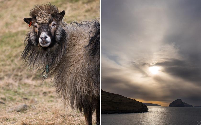 Vykort från Färöarna, Faroe Islands