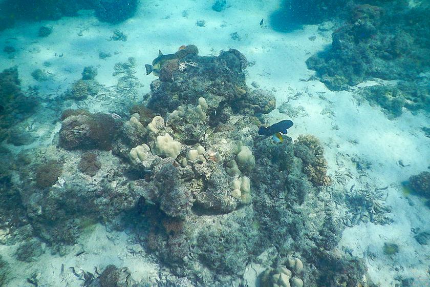 Bazaruto Anatara snorkling house reef