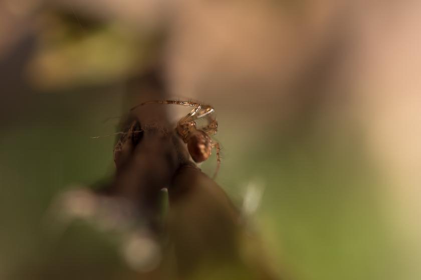Eldgarnsö, macrofotografering
