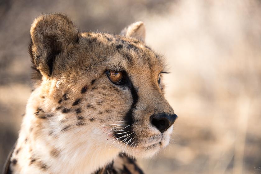 Naankuse Namibia