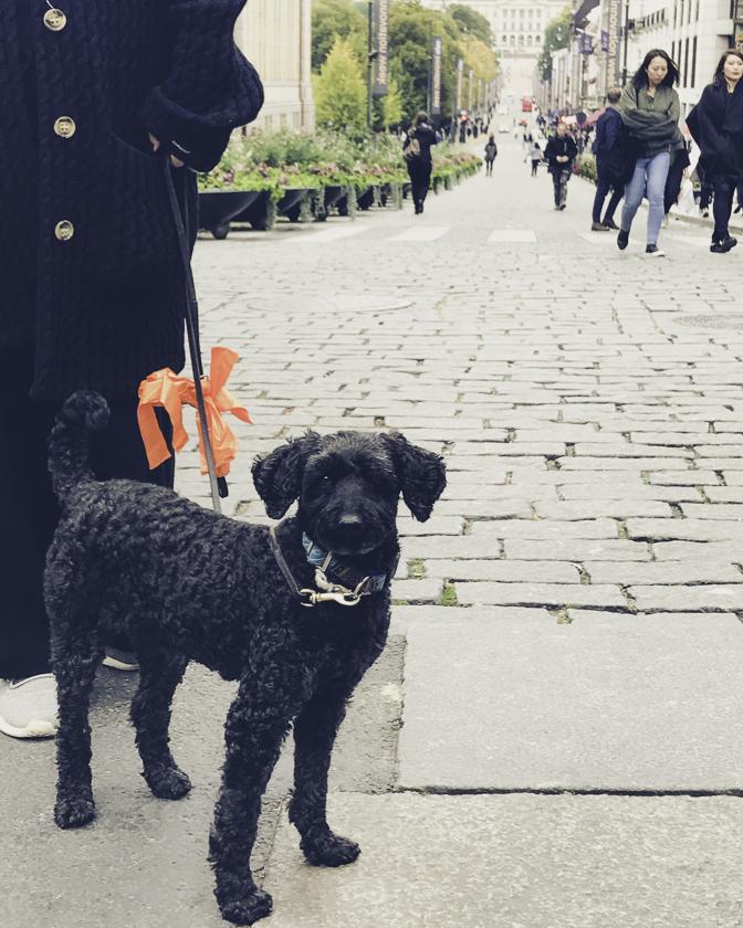 resa med hund till norge, weekend i oslo,