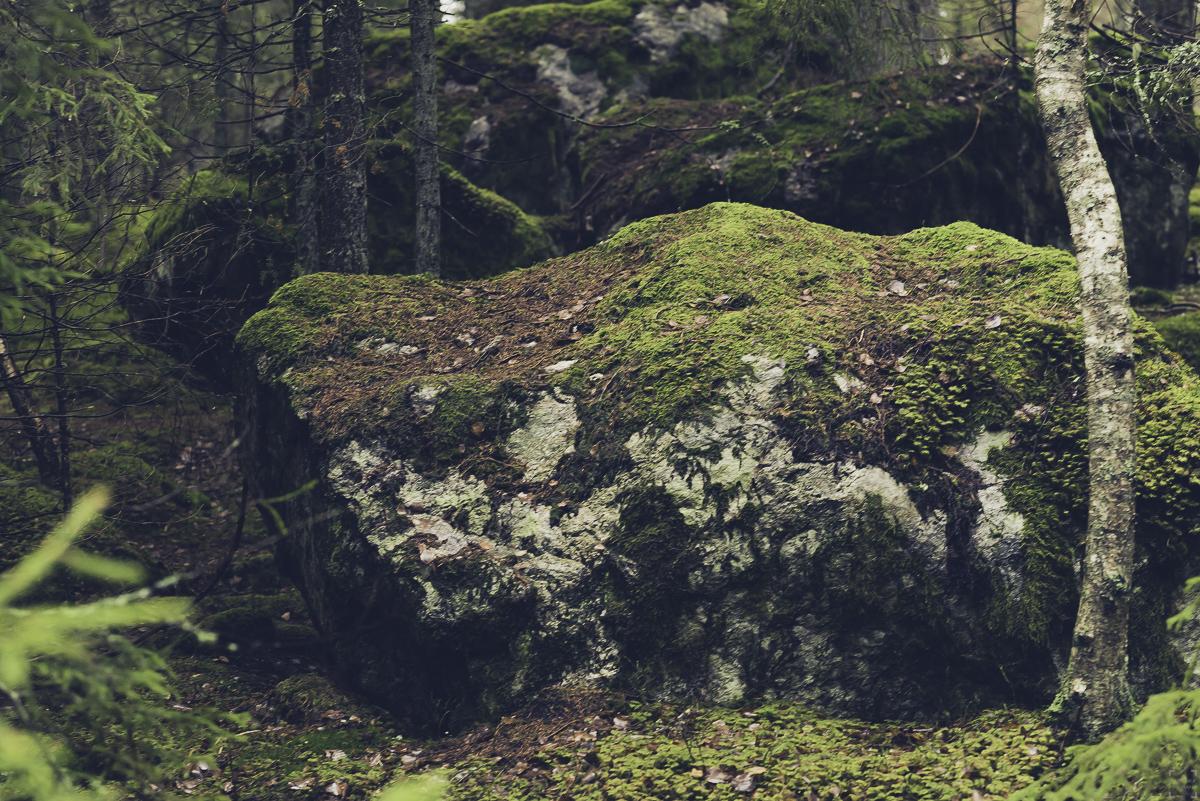 Bylsjöslingan, Tyresta nationalpark, vandring