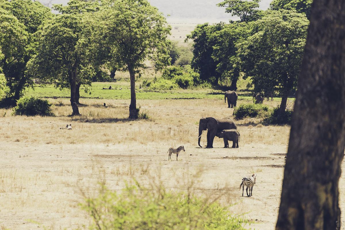 Safari i Tanzania, bästa julresan