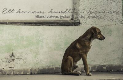 Reseblogg, Resa till Kuba,gatuhundar