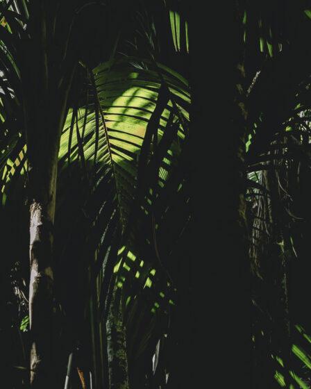 Vallee de Mei, Praslin, Seychellerna