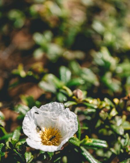 Vandring längs Algarvekusten, Cape St Vincente, Reseblogg