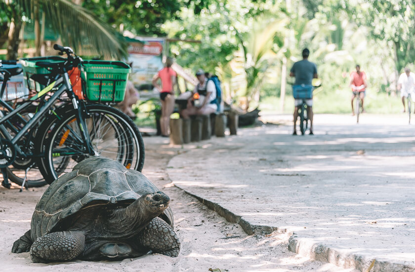 Resa till Seychellerna, La Digue, sköldpadda