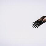 Storkar, Algarve