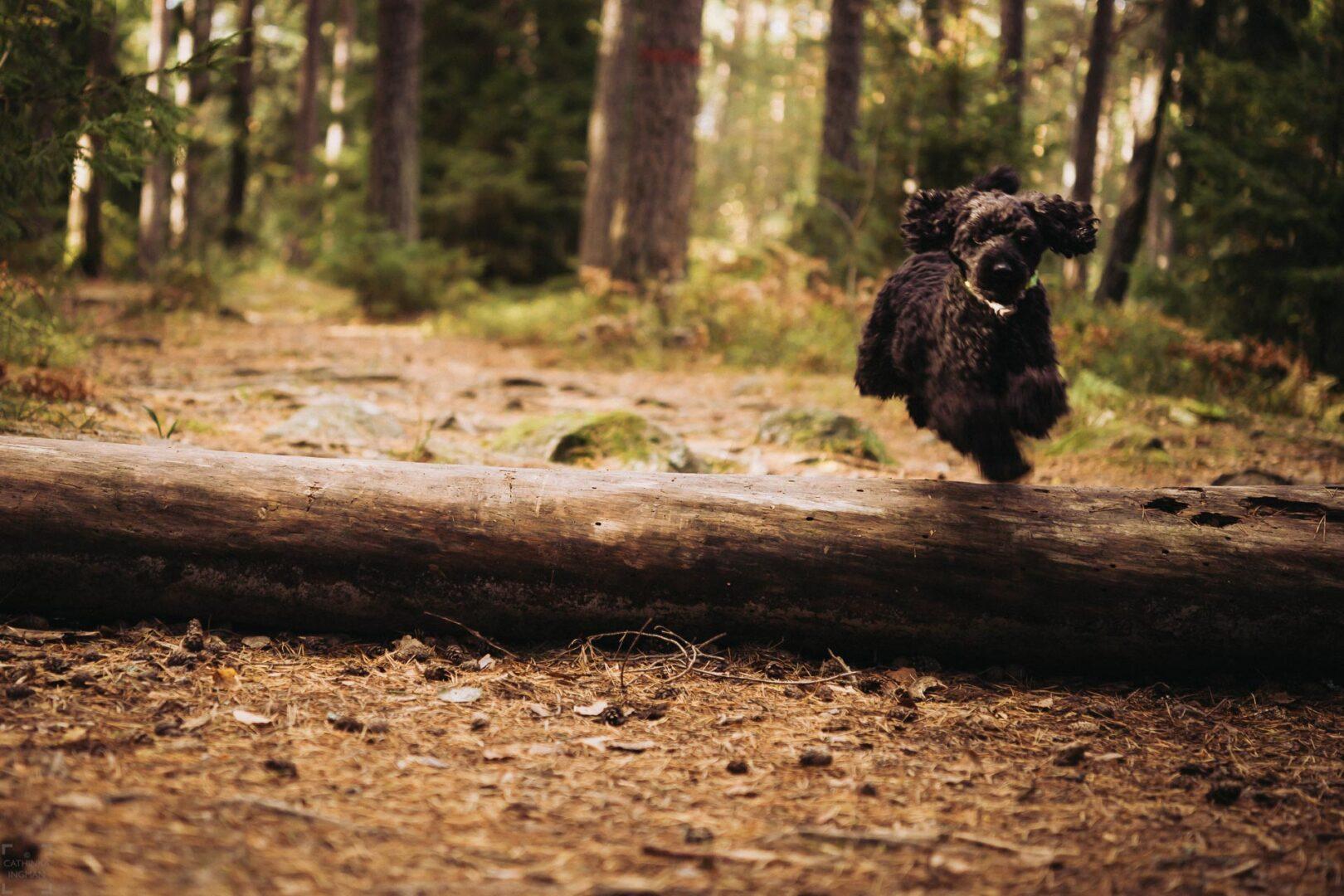 Vandra på Lovön med hund