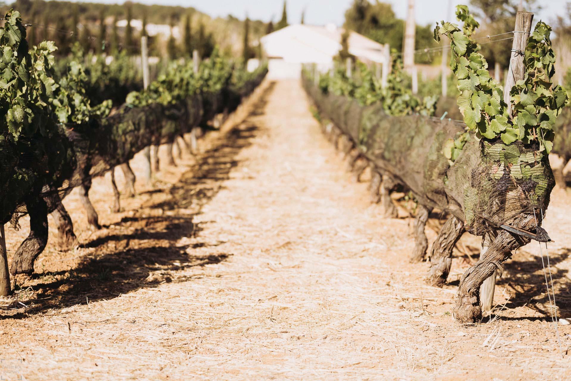 Vingårdar på Algarve, Monte de Casteleja