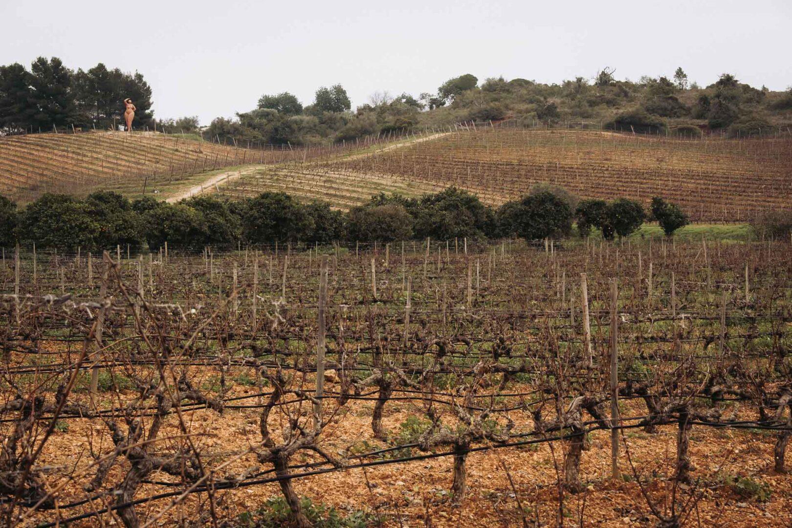 Vingårdar på Algarve, Quinta dos Vales