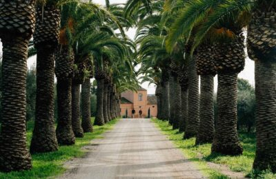 Olivolja på Algarve