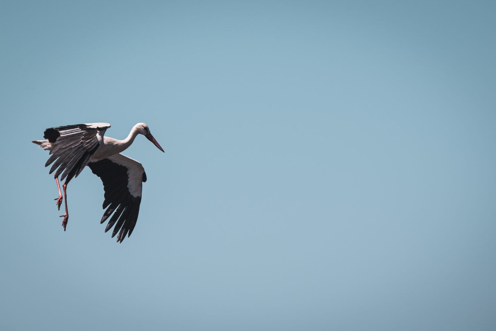 Stork går in för landning