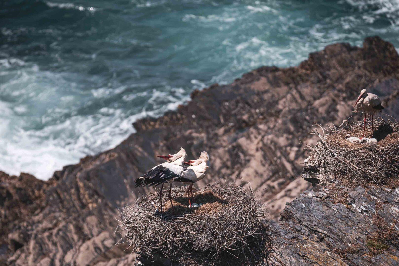 stork i Algarve