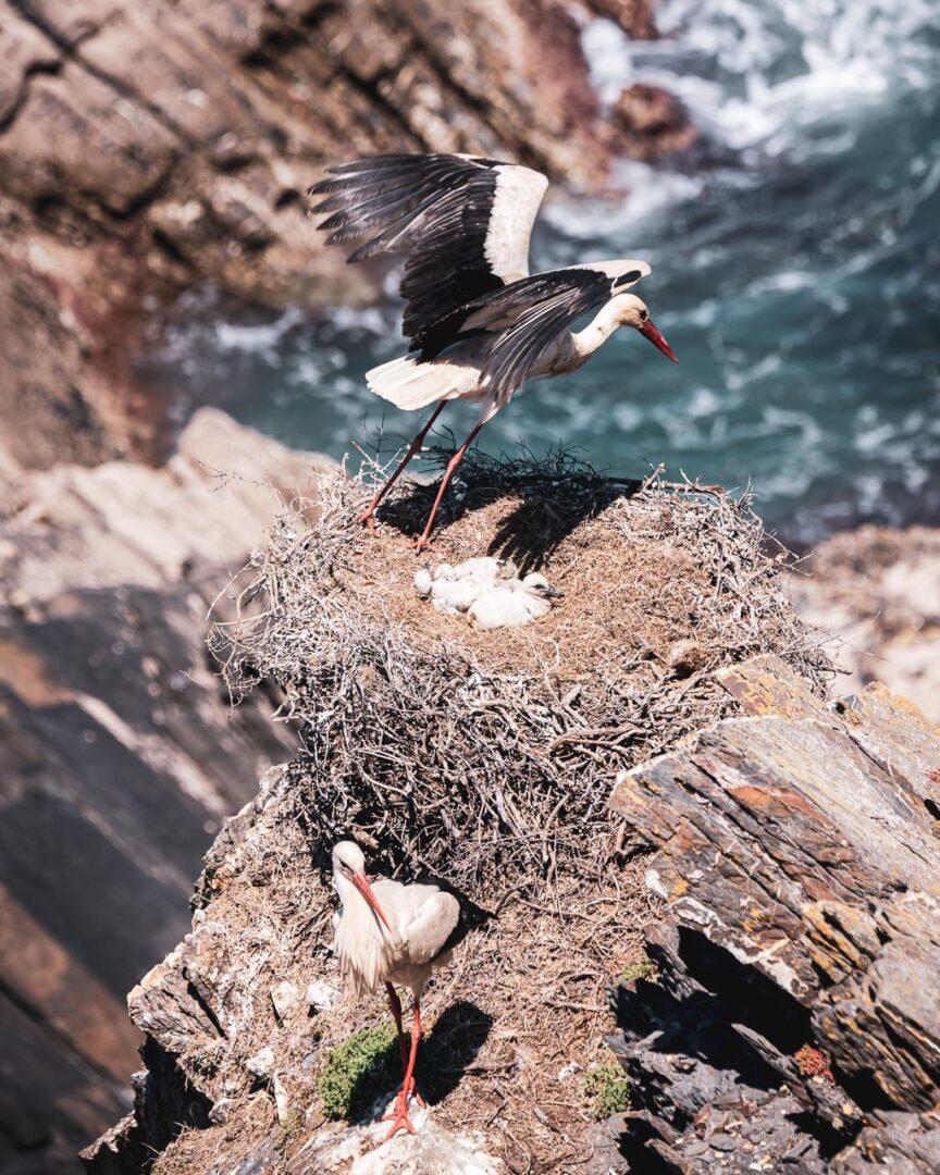 stork, vaktavlösning i storköket